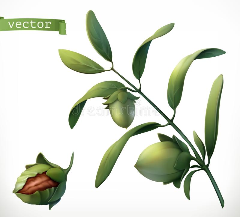 Jojoba. 3d realistic vector icon royalty free illustration