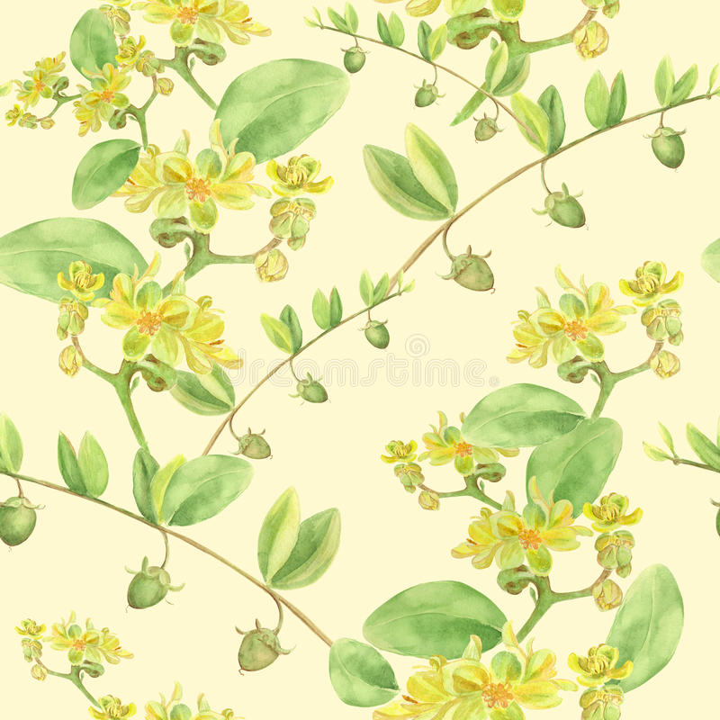Jojoba - flores e frutos filiais ilustração stock