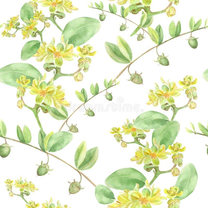Jojoba - flores e frutos Fundo sem emenda ilustração do vetor