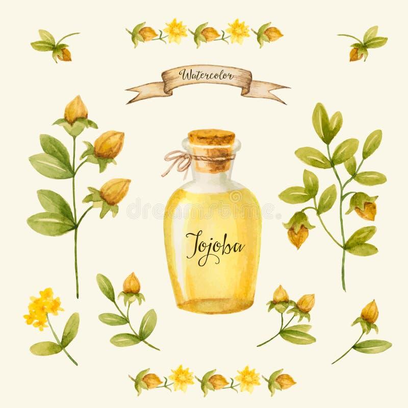 Jojoba stock illustration