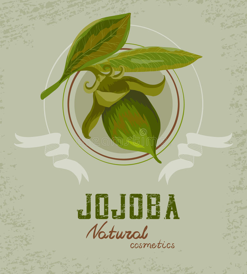 Jojoba plant logo royalty free illustration