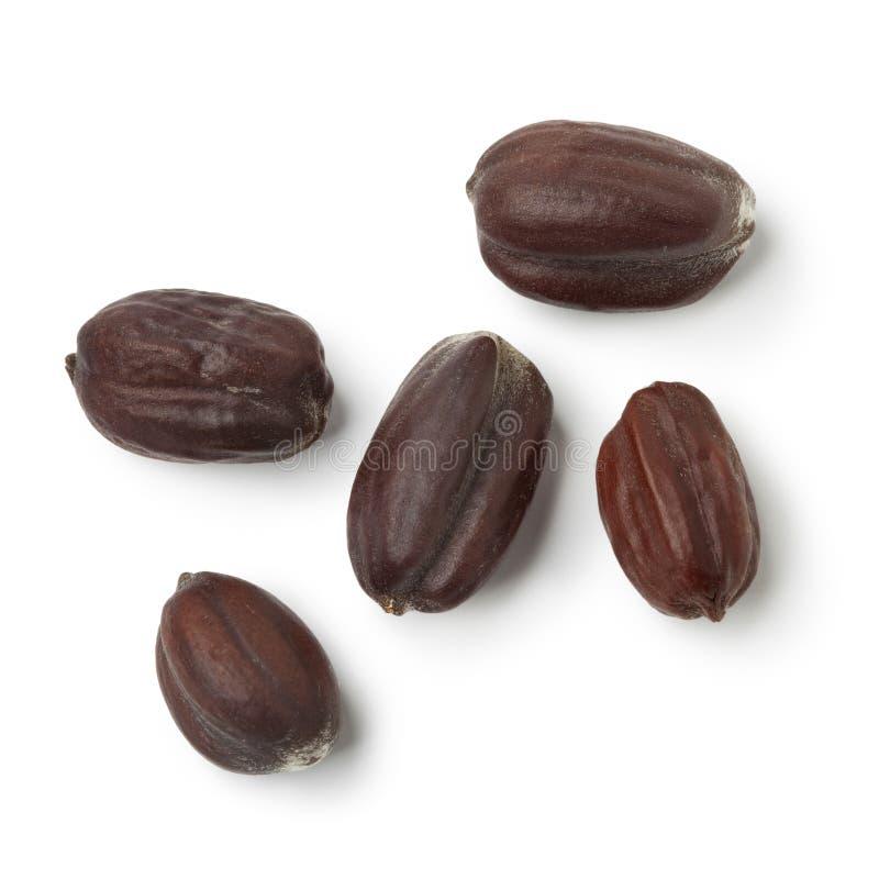 Jojoba seeds stock photography