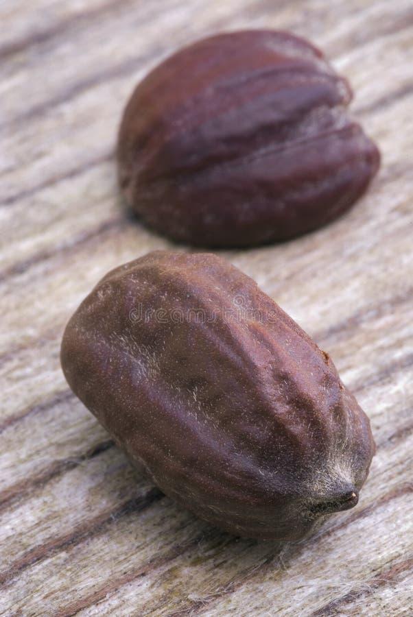 Jojoba seeds (Simmondsia chinensis) royalty free stock photography