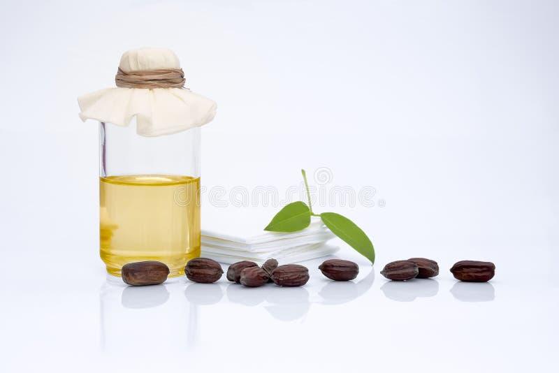 JojobaSimmondsia chinensis sidor, frö och olja arkivfoto
