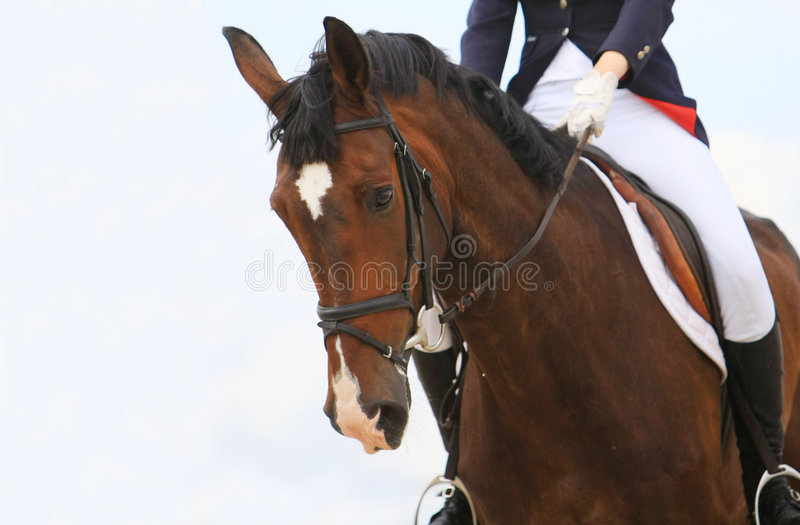 Jokey sur le cheval de dressage photos libres de droits