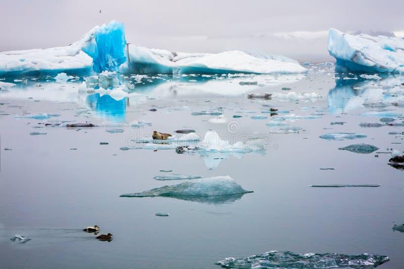 Jokulsarlon冰河盐水湖在海岛 库存图片