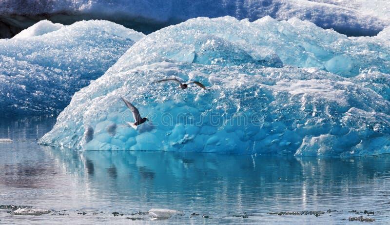 Jokulsarlon,冰川冰山盐水湖在Vatnajokull国家公园 免版税库存照片