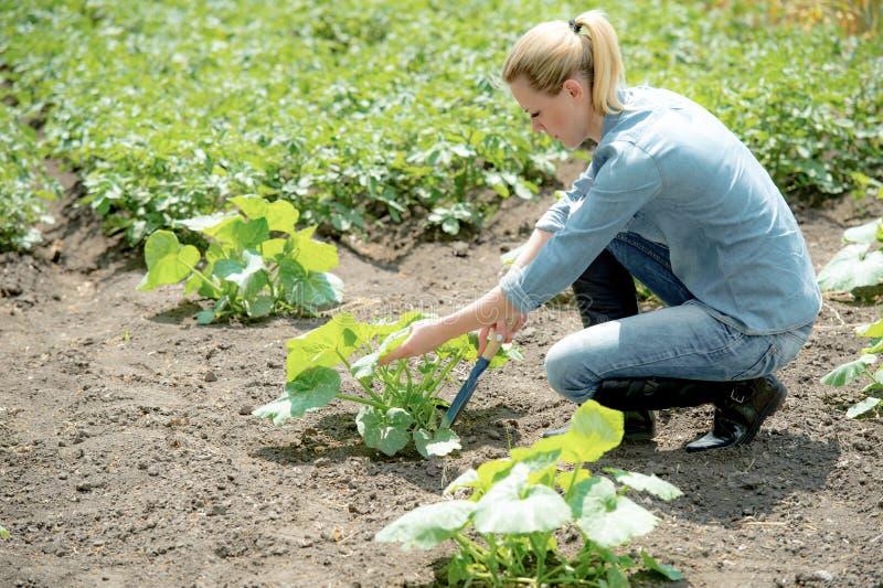 Joli agronome enlevant les mauvaises herbes Fond de champ photos libres de droits