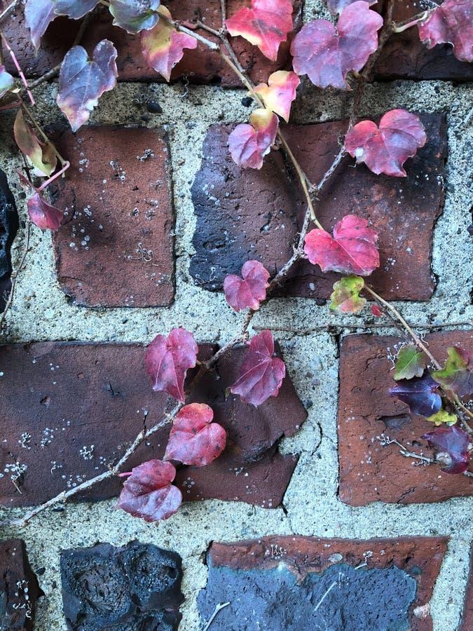 Joli Autumn Leaves sur la conception florale de fond d'automne de mur de briques photos stock