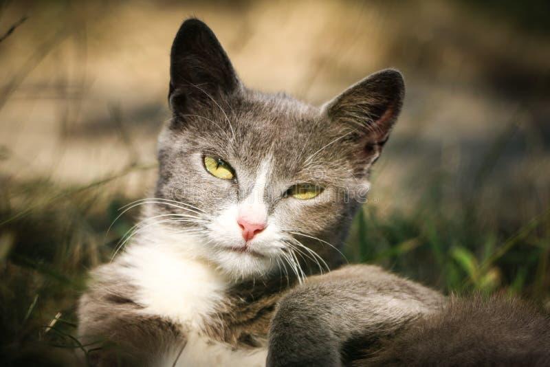 Joli chat photographie stock