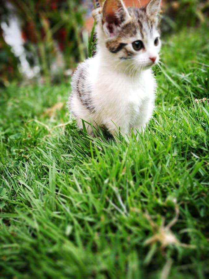 Joli chat photographie stock libre de droits