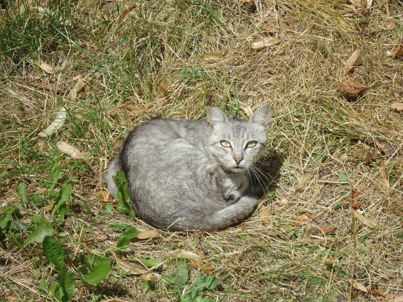 Joli chat de rue image stock