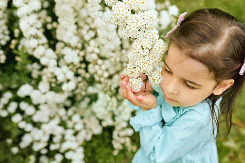 Joli enfant reniflant les fleurs blanches en parc de ville Belle petite fille portant la robe bleu-clair images libres de droits