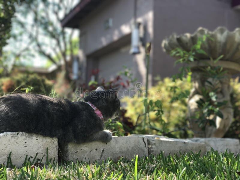 Joli Gray Cat images stock