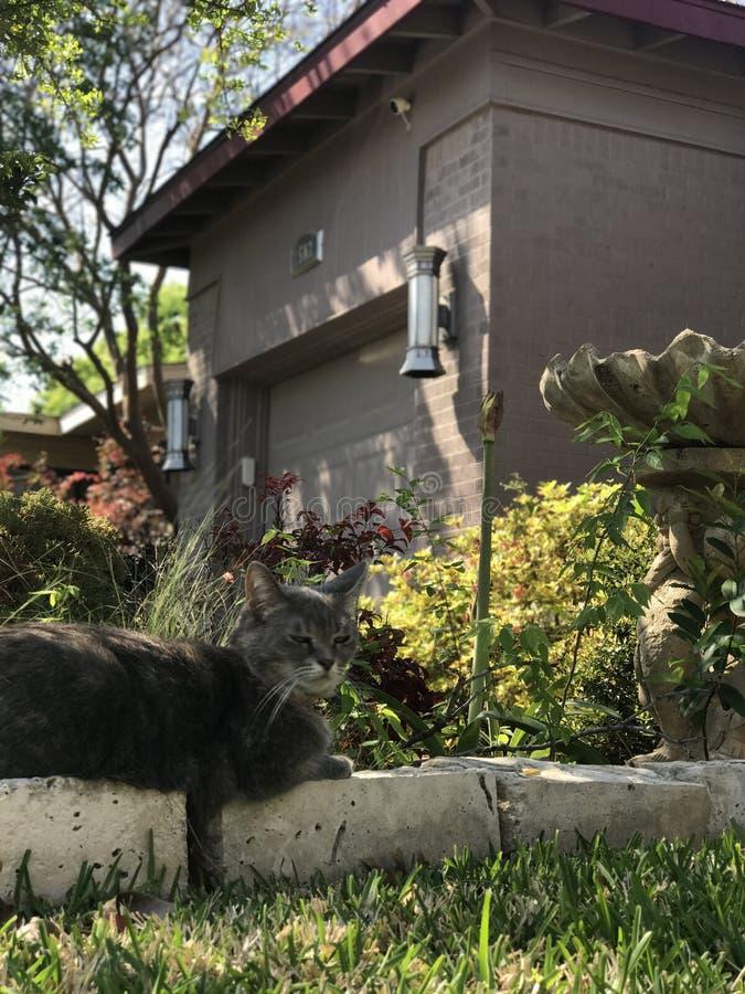 Joli Gray Cat image libre de droits