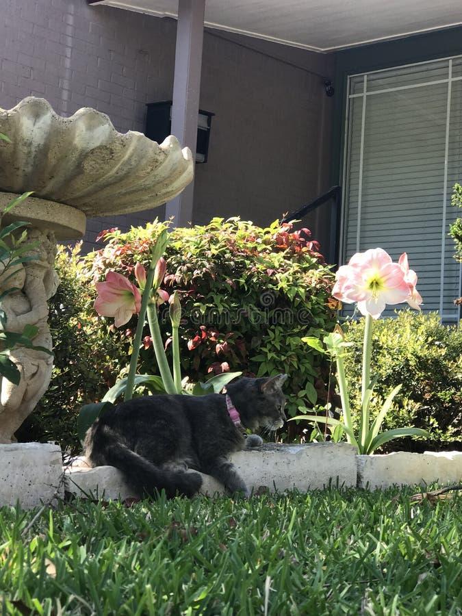 Joli Gray Cat photo stock