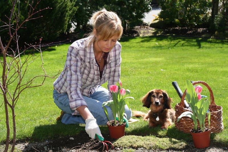 Joli jardinier image libre de droits