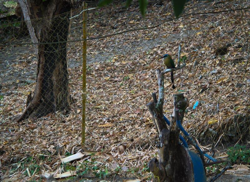 Joli oiseau sur un tronçon photographie stock libre de droits