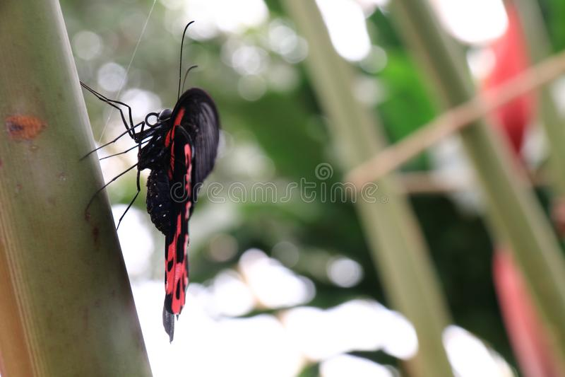 Joli papillon été perché sur un poteau en bambou image stock