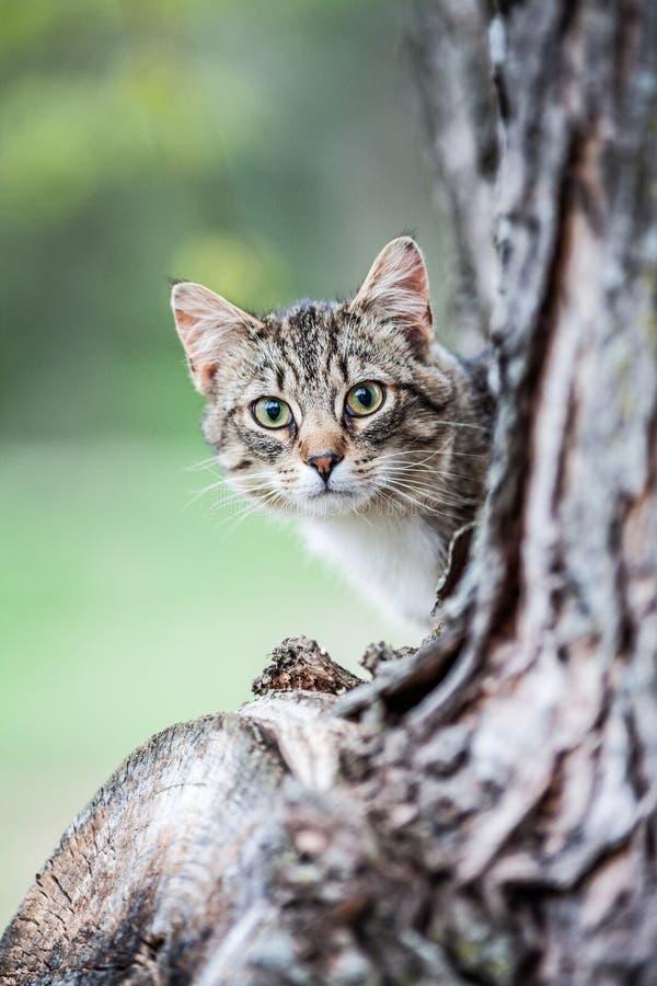 Joli Tiger Cat photographie stock libre de droits