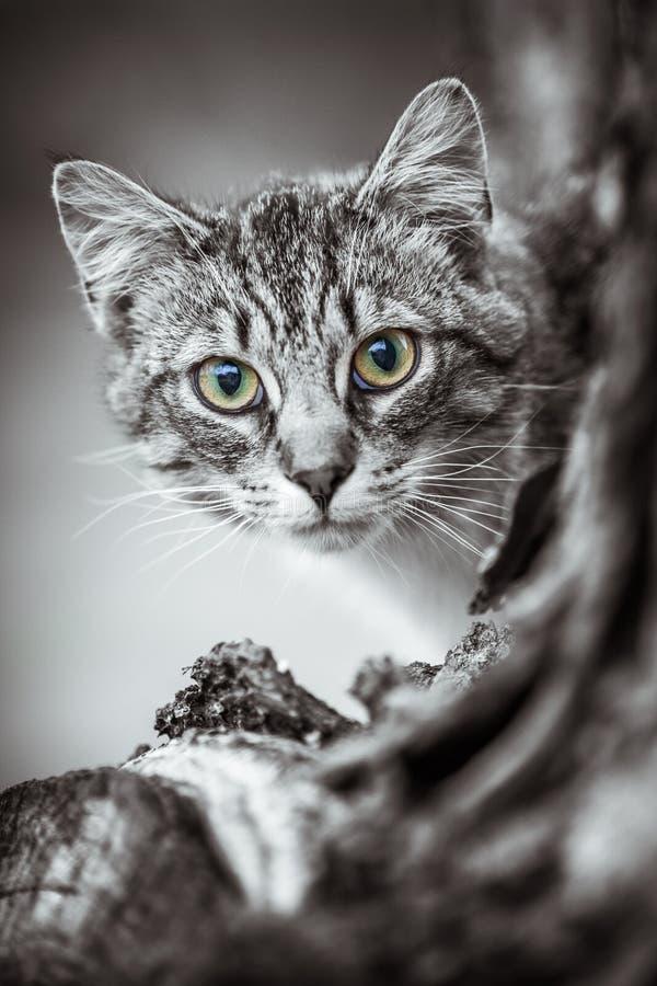 Joli Tiger Cat photographie stock