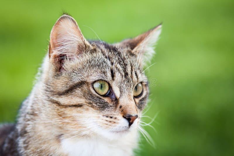 Joli Tiger Cat image stock