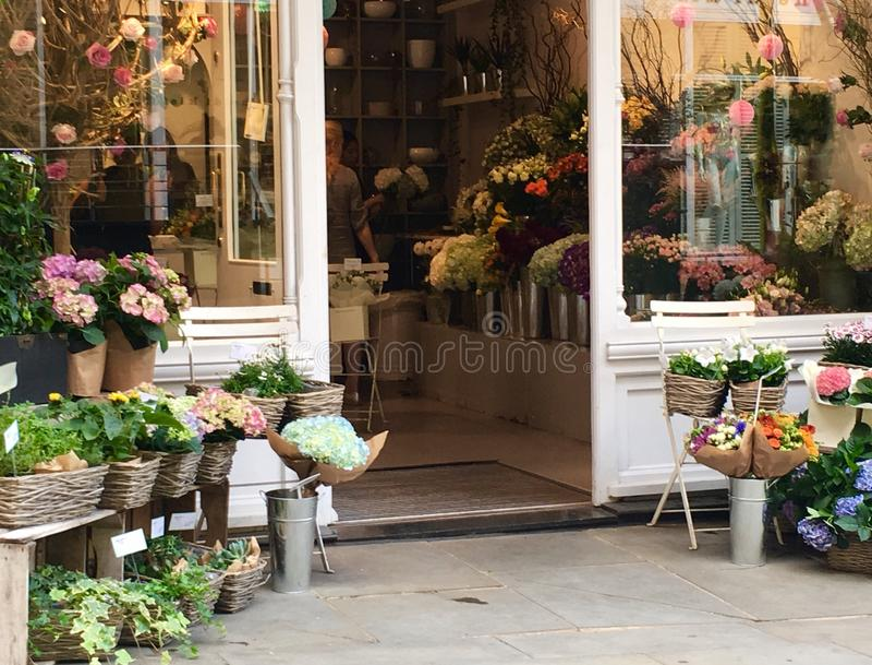 Jolie Chelsea Flowers photos libres de droits