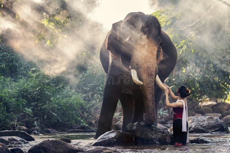Jolie fille dans des costumes thaïlandais traditionnels touchant l'ivoire du ` s d'éléphant image libre de droits