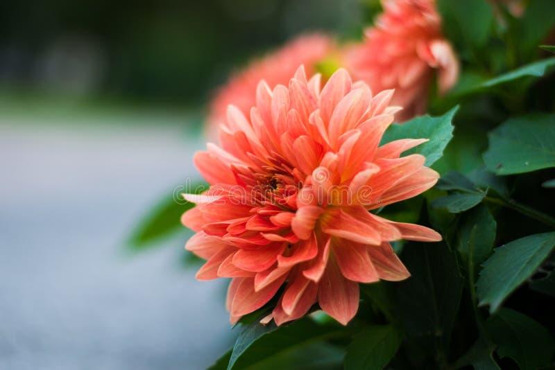 Jolie fleur en parc de ville image stock