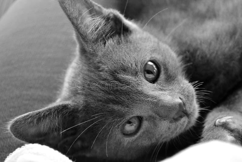 Jolie Kitty Puddin Jam 2 images libres de droits