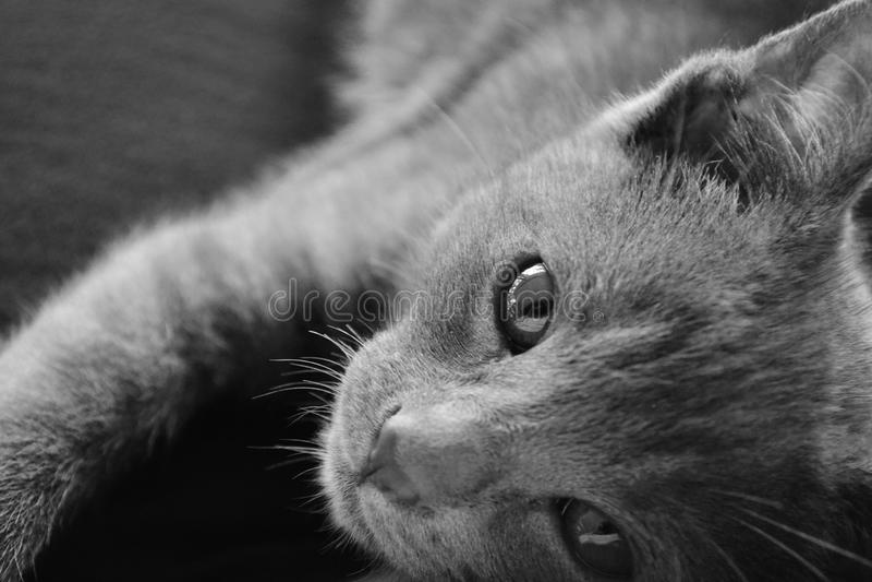Jolie Kitty Puddin Jam photos libres de droits
