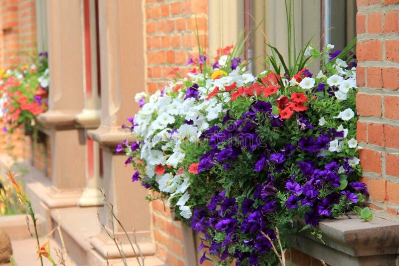 Jolies boîtes de fenêtre de fleur dans l'immeuble de brique images stock