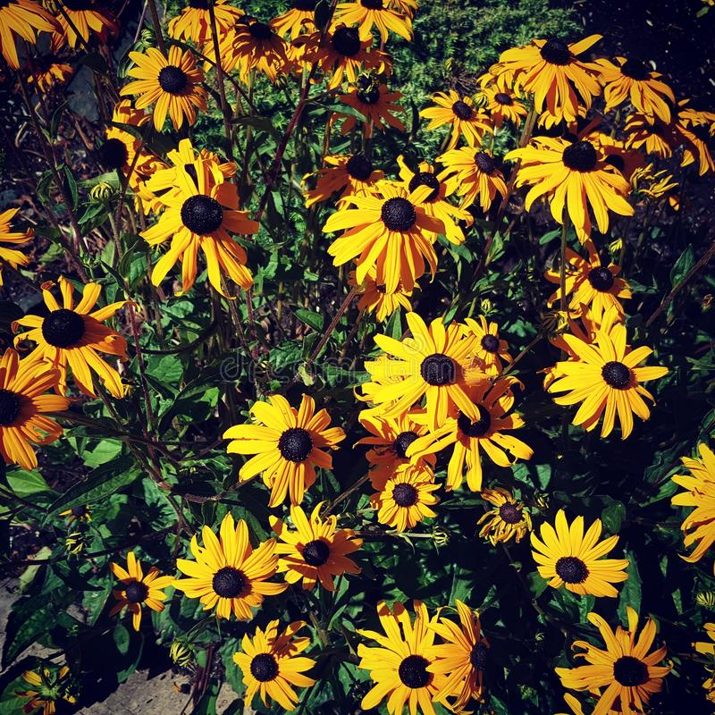 Jolies fleurs photo stock