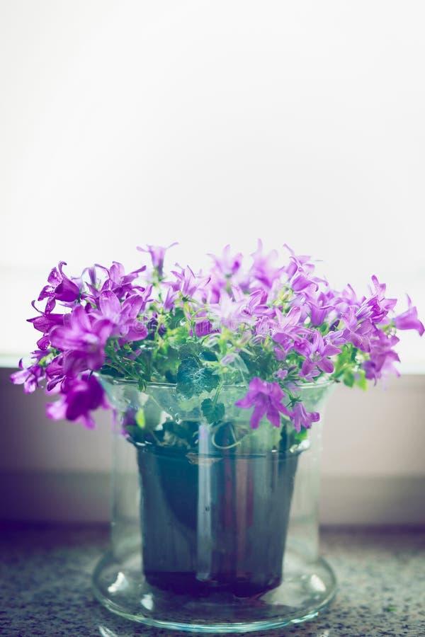 Jolies fleurs de cloche dans le pot en verre sur le rebord de fenêtre Décoration à la maison images libres de droits