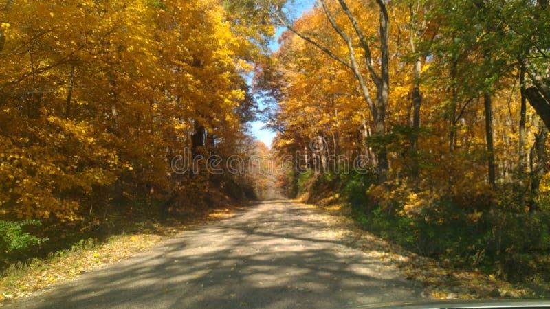 Jolis arbres dessus les deux côtés de route photos libres de droits