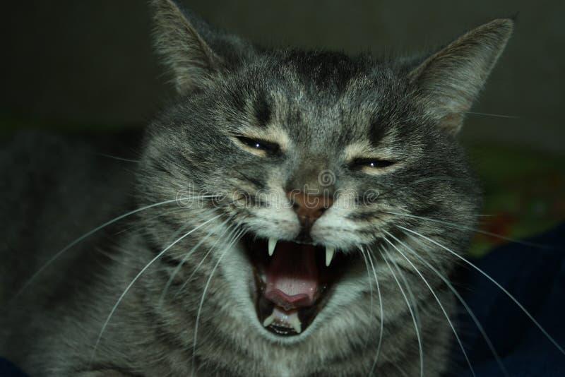Jolly cat stock photos