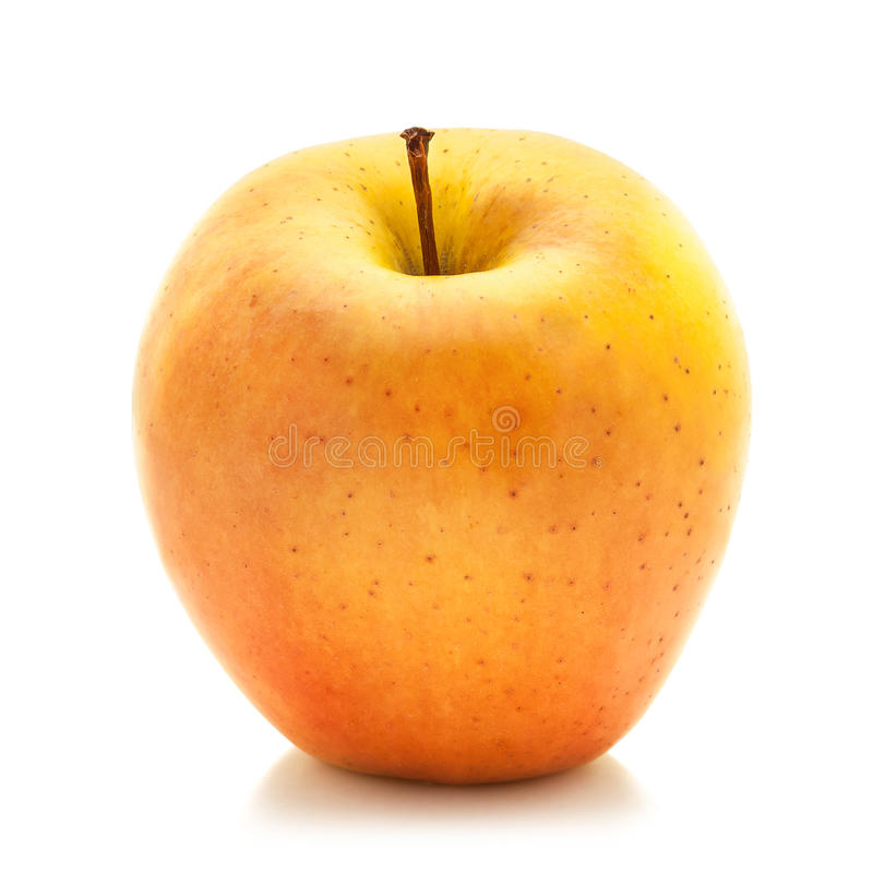 Jonagold apple royalty free stock photo