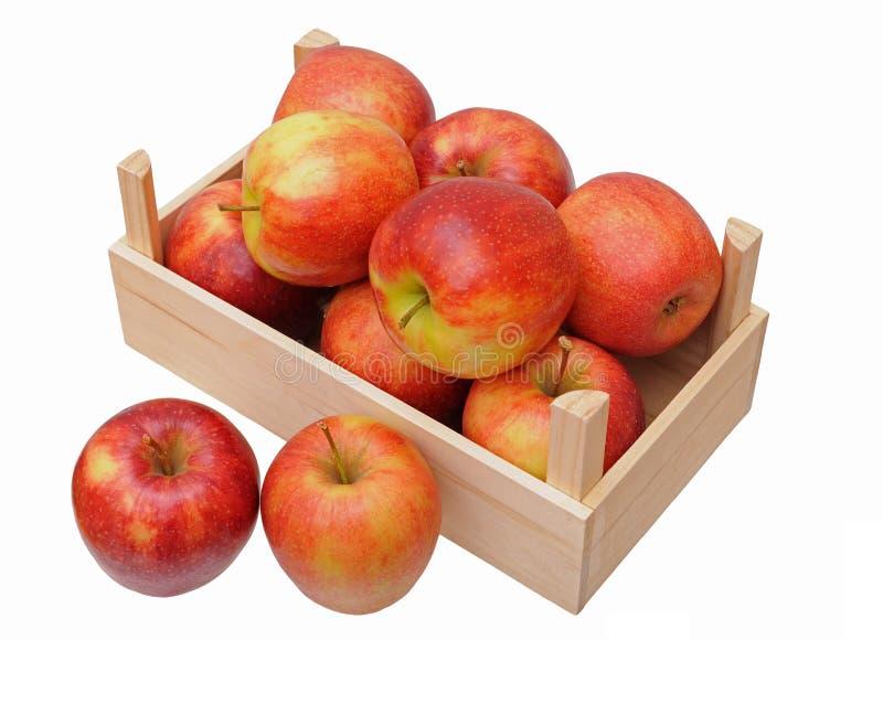 Jonagold jabłka obraz royalty free