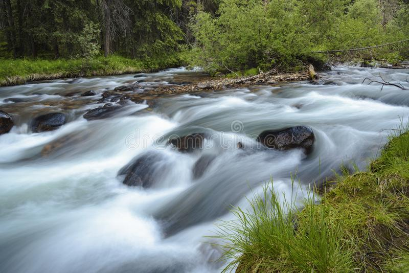 Jonas Creek Jasper National Park, Alberta, Kanada arkivfoton