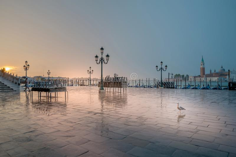 Jonathan Livingston in Venedig stockfotos