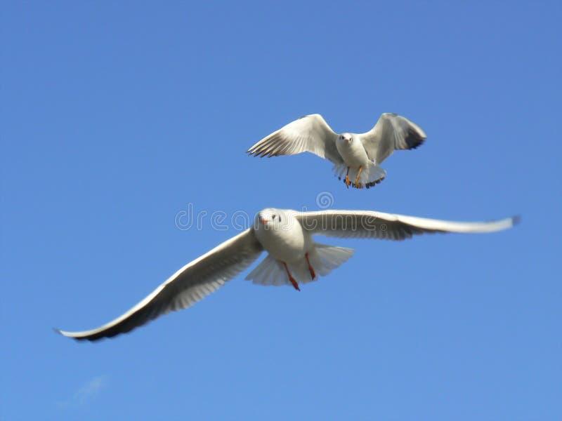 Download Jonathan's followers stock photo. Image of jonathan, wings - 1865082