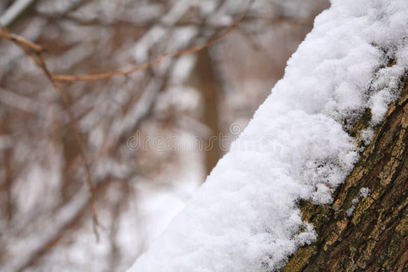 joncteur réseau d'arbre de snowbank images libres de droits