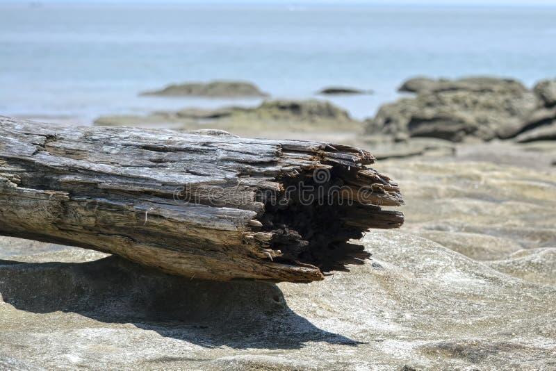 Joncteur réseau d'arbre sur la plage photographie stock