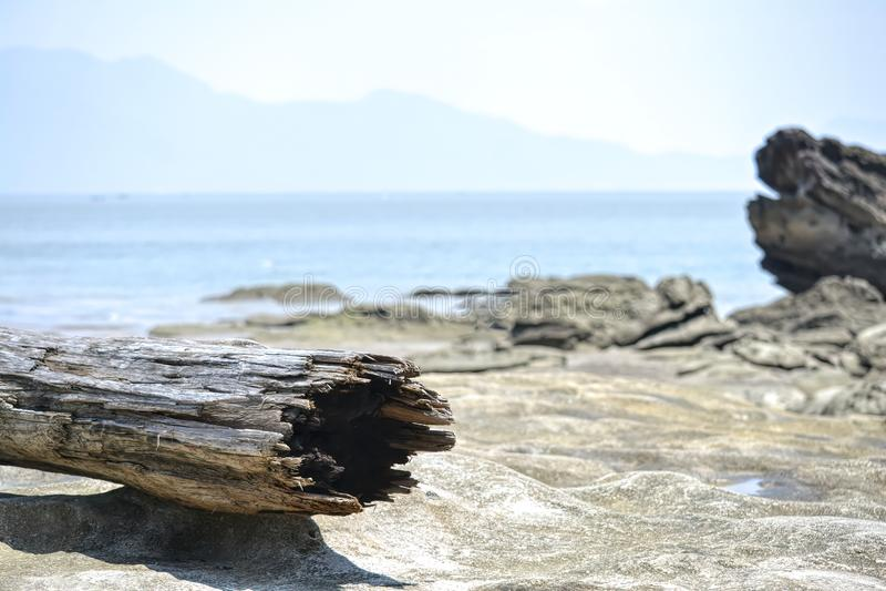 Joncteur réseau d'arbre sur la plage photographie stock libre de droits
