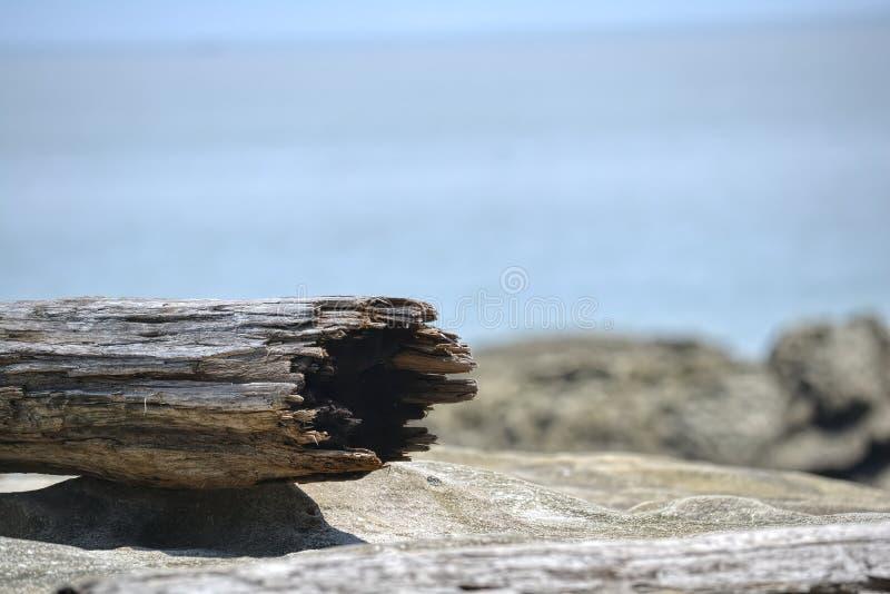 Joncteur réseau d'arbre sur la plage images libres de droits