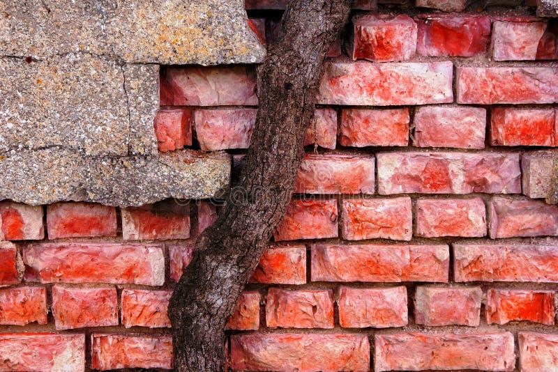 Joncteur réseau de mur de briques et d'arbre images libres de droits