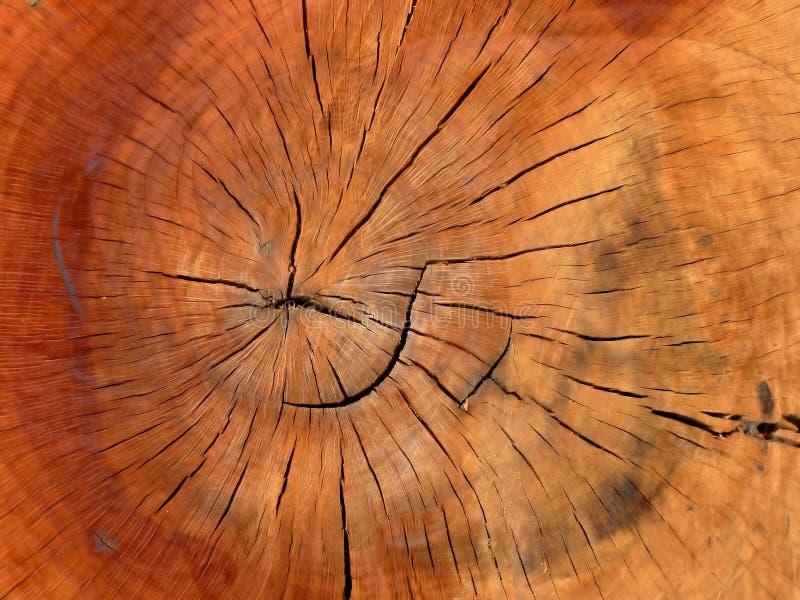 Joncteur réseau en bois I photographie stock libre de droits