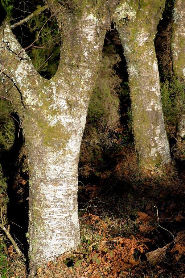 Download Joncteurs Réseau Des Arbres Avec De La Mousse Photo stock - Image du forêt, monde: 740250
