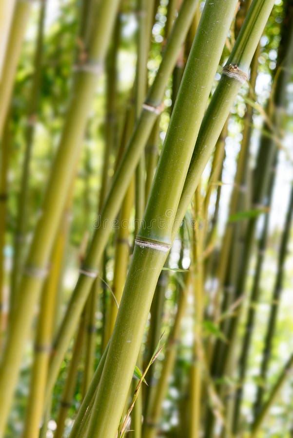 Joncteurs réseau en bambou verts photos libres de droits