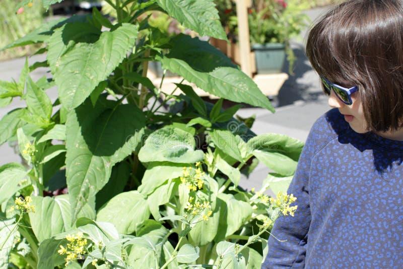 Jong aan de grond gezet glimlachend kind die een inlandse mosterdinstallatie bekijken royalty-vrije stock afbeeldingen